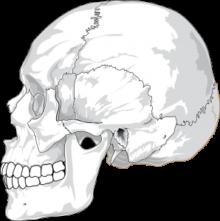 生まれた時、顔や頭の大きさは違いますか?